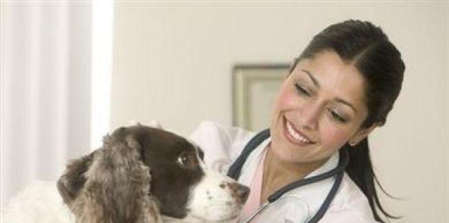 PL 758/2015 - Proíbe a exigência de caução para internação de animais